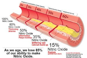 Nitric Oxide Cholesterol Connection