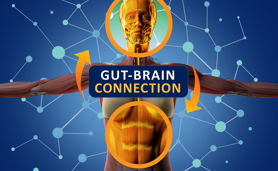 Probiotics Boost Cognitive Function