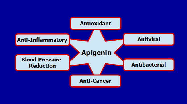 Can Apigenin Prevent and Reverse Cancer